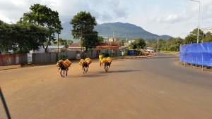 AfricaStreet_WEB