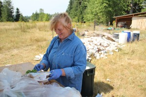 Mary Ann sorts through a fresh bag of compost from the Festival at Sandpoint. Photo by Ben Olson.
