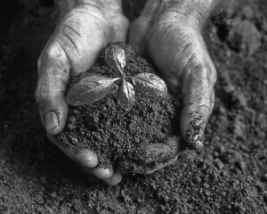 Soil-fertility-bw