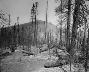 The aftermath of the Sundance Fire in 1967. Photo by Chuck Peterson, used by permission from Bonner County Historical Society.