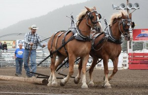 A pair of draft horses at 2014's show. Photo courtesy of Facebook.