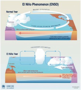 The El Niño Phenomenon explained. During a normal year, equatorial winds gather warm water and pool it toward the west, creating cold water off the coast of South America. During an El Niño year, easterly winds weaken and warm water moves to the eastward, creating the potential for a warmer winter in North America. Diagram courtesy of ENSO.