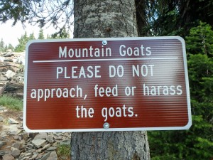 Seriously though… don't feed the goats!