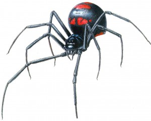 BlackWidow-WEB