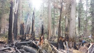 Ross Creek Trail #142 was still smoldering when the USFS took this picture last September (note the trail crew member at right). USFS photo.