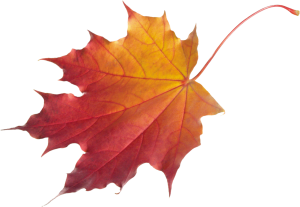 autumn_leaves_png3601