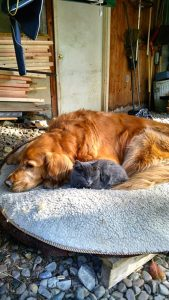 Ben and Kitty were the best of pals. Photo by Chris White.