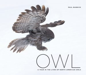 """Owl: A Year in the Lives of North American Owls,"" by Paul Bannick."