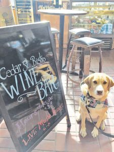 Drake gives his paw of approval to Cedar St. Bistro's new Wine Bar expansion.