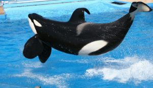 Toy-Company-Offers-Santuary-For-Tilikum-940x545