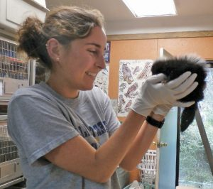 A former intern with an orphaned skunk patient.