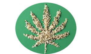 Hemp seeds are packed with Omega-3, and make a healthy food additive. Commons photo.