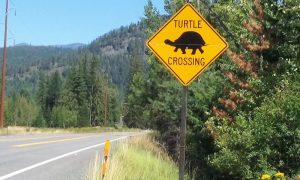 The turtle crossing sign, now missing due to thieves. Photo by Cynthia Mason.
